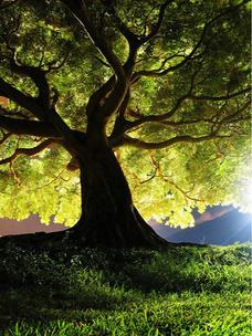Фото №9 - Тест: Выбери дерево, и мы скажем, во сколько лет ты станешь успешной