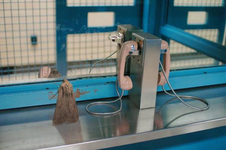 Фото №4 - Лучшие фотожабы на «мотылька в душевном кризисе»