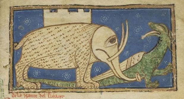 Фото №1 - Как средневековые люди представляли себе слонов (15 вариантов)