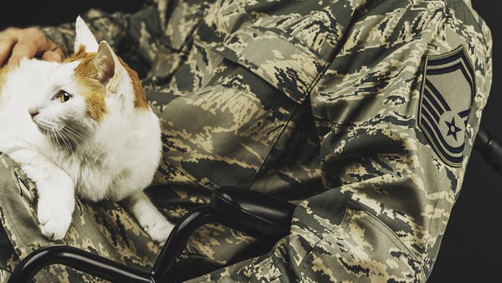 Фото №4 - 24 кошки, которые удивили своими геройскими поступками