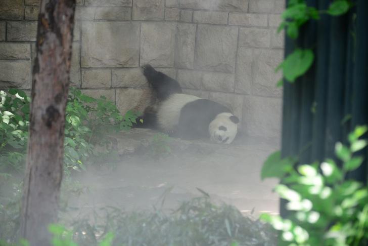 Фото №1 - Спа для панды