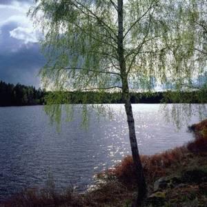 Фото №1 - В России отмечают День эколога