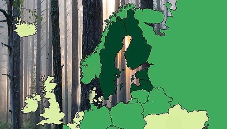 Фото №1 - Карта: сколько процентов территории занимают леса в странах Европы и России