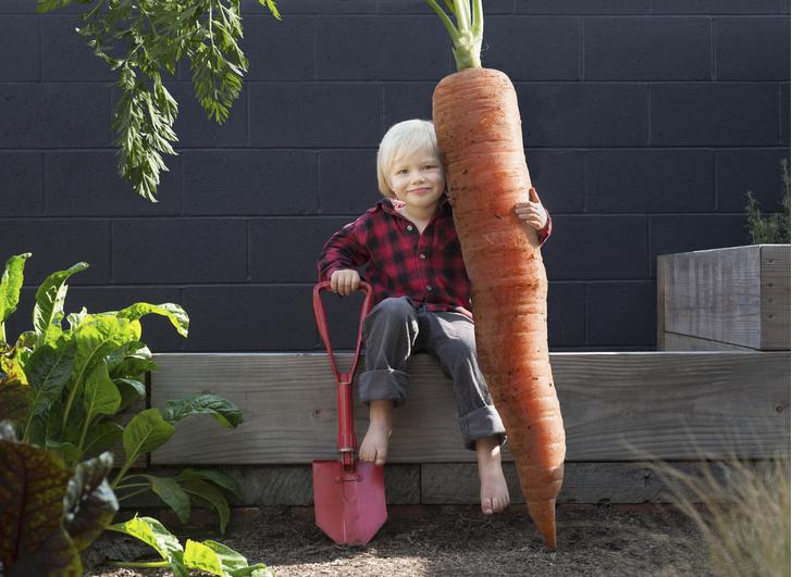 Фото №1 - Размер имеет значение: 30 фото овощей-гигантов