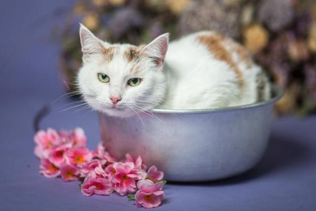Фото №4 - Котопёс недели: возьми из приюта собаку Тростинку или кошку Стешу