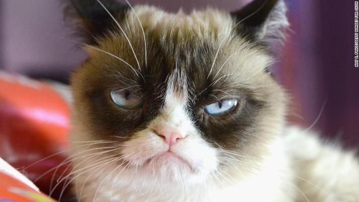 Фото №1 - Тест: Какой ты мемный кот?