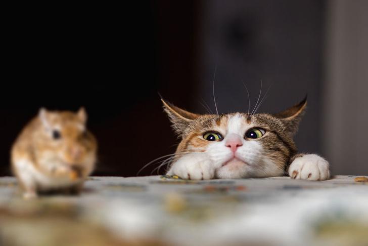 Фото №2 - Домашних кошек причислили к природным бедствиям