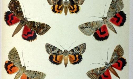 Фото №1 - В петербургской детской больнице создается центр помощи детям-бабочкам