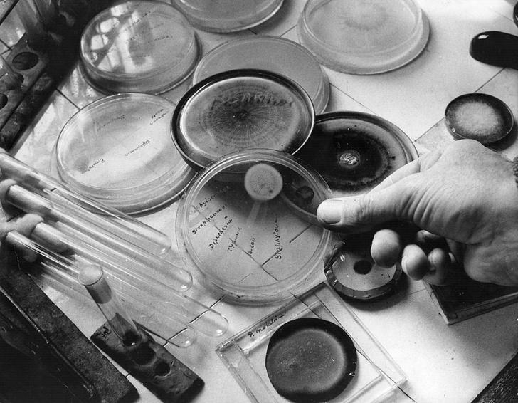 Фото №1 - Отец антибиотиков: как неряха Александр Флеминг спас человечество