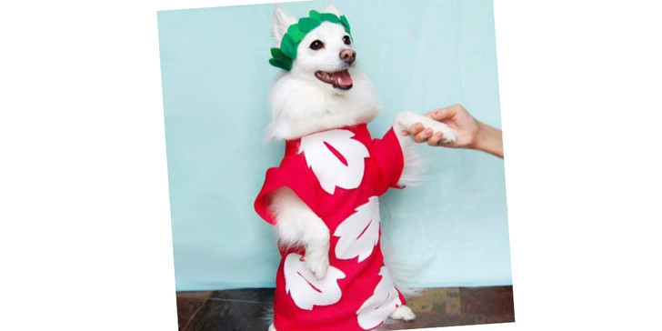 Фото №17 - 20 очаровательных собак в костюмчиках по мотивам мультфильмов Disney