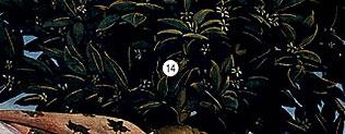 Фото №14 - 14 символов, зашифрованных в «Венере» Боттичелли