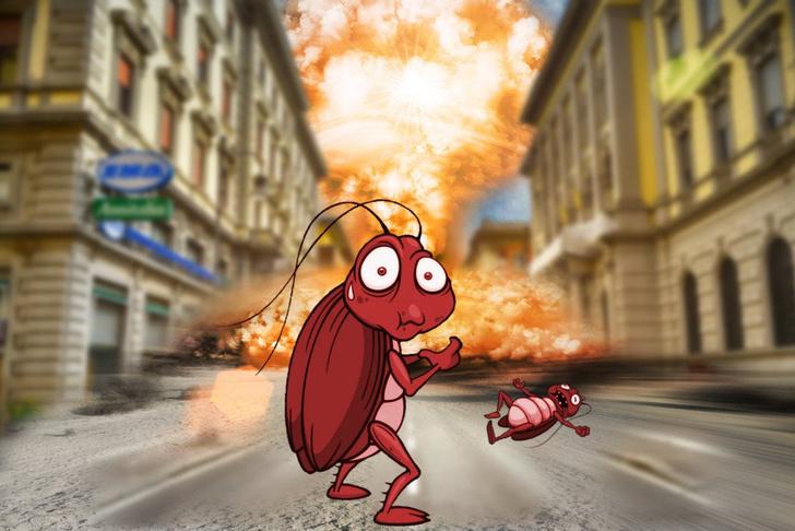 Фото №3 - Правда ли что тараканы могут выжить после ядерного взрыва