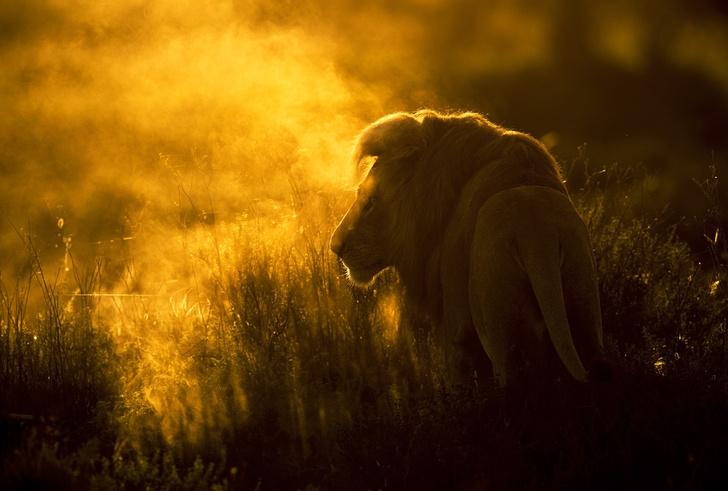 Фото №1 - «Лев в тумане»