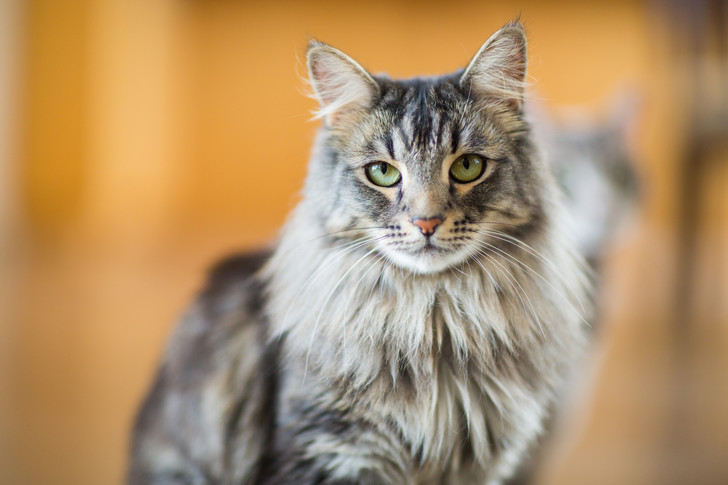 Фото №13 - Овну— мау, Раку— сфинкс: какая кошка подходит вам по знаку зодиака