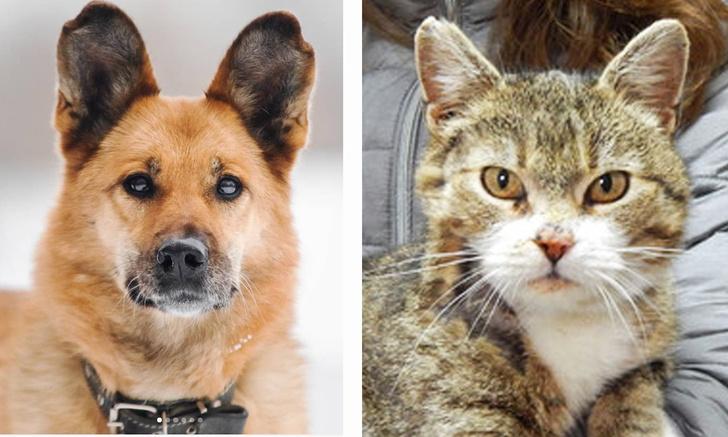 Фото №1 - Котопёс недели: кошка Пелагея и пес Феня
