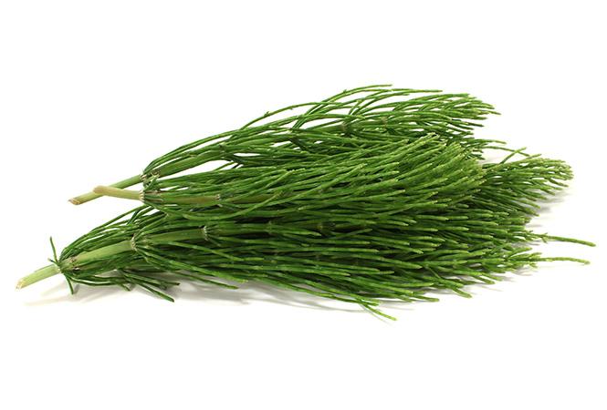 Фото №13 - Самые полезные лекарственные травы
