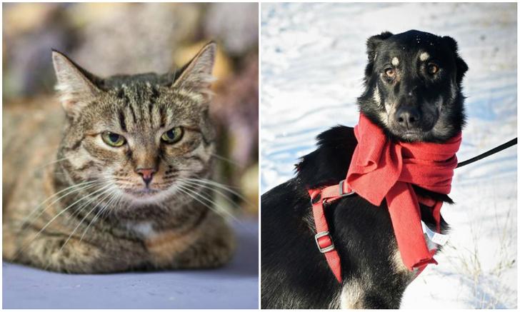 Фото №1 - Котопес на карантине: кошка Нимфа и собака Аризона ждут своих людей