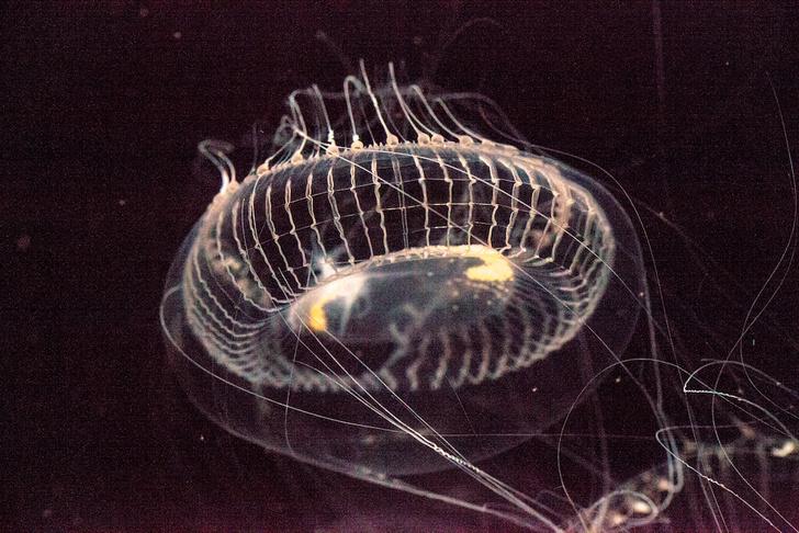 Фото №7 - Свечение моря: 5 примеров биолюминесценции в Мировом океане