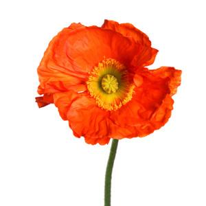 Фото №3 - Тест: Выбери цветок, и мы скажем, какая ты на самом деле