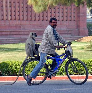Фото №1 - Обезьяны захватили индийский парламент
