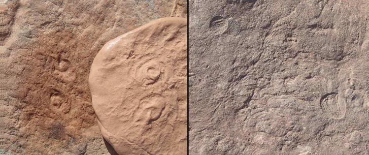 Фото №1 - Ископаемое животное названо в честь Обамы