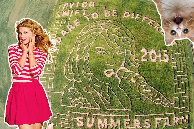 Фото №2 - OMG! Лицо Тейлор Свифт появилось на кукурузном поле