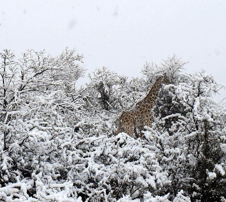 Фото №1 - В Южной Африке выпал снег