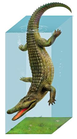 Фото №3 - Удивительная живучесть крокодильего племени