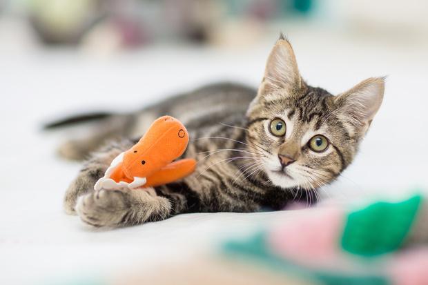 Фото №1 - 12 лучших анекдотов про котиков всех времен