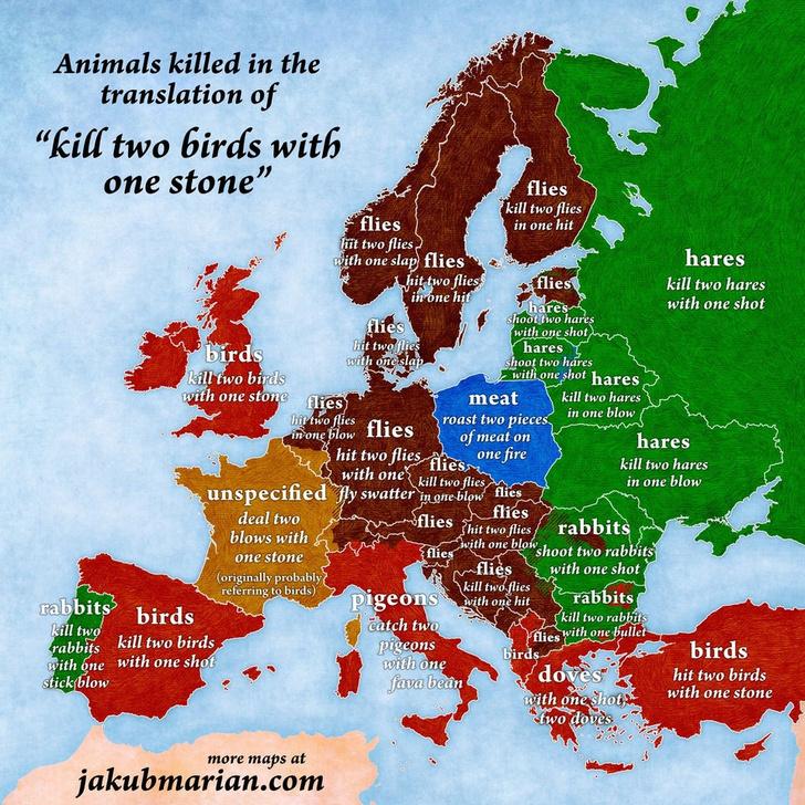 Фото №2 - Как звучит фразеологизм «убить двух зайцев» в разных странах (карта прилагается)