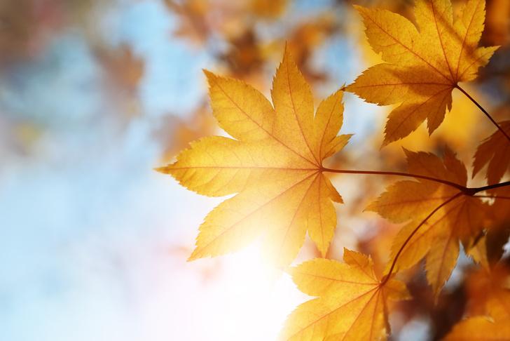 Фото №1 - Почему «сентябрь» означает седьмой, если на самом деле он девятый?