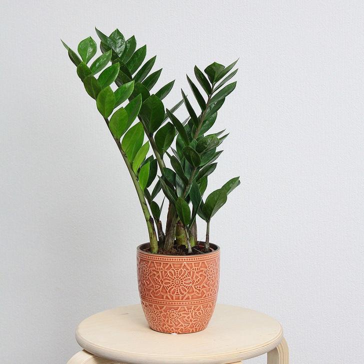Фото №4 - Все, что нужно знать о пересадке комнатных растений
