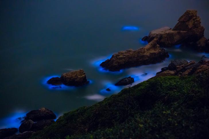 Фото №2 - Свечение моря: 5 примеров биолюминесценции в Мировом океане