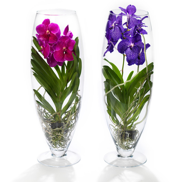 Фото №4 - 5 сортов самых красивых и неприхотливых орхидей