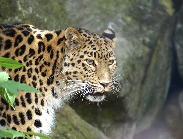 Фото №2 - На грани вымирания: 5 самых редких животных планеты