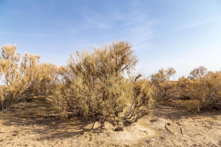 Фото №3 - Зри в корень: занимательные факты о «подземной» жизни растений