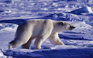 Фото №2 - Богатые должны дать денег на климат
