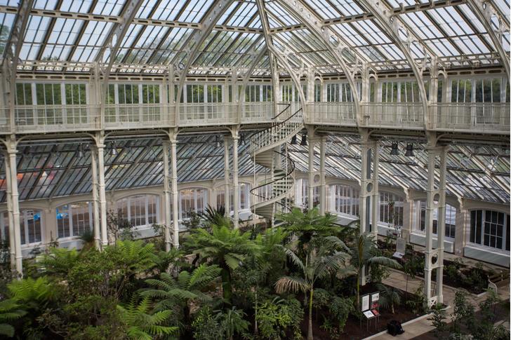 Фото №1 - Крупнейшая викторианская теплица вновь открыта для посетителей
