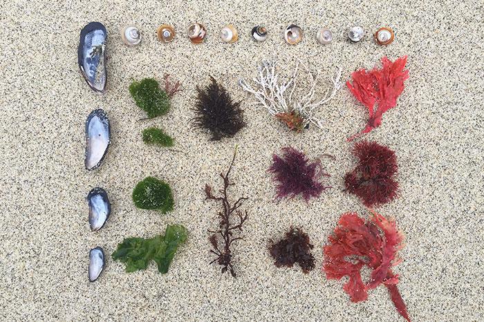 Фото №2 - Косметика на основе морских компонентов: чем она лучше?