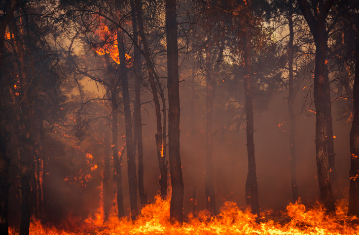 Фото №1 - В Сибири горит почти 3 миллиона гектаров леса