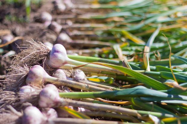 Фото №1 - На всю зиму: как хранить в квартире картошку и другие овощи