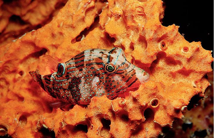 Фото №3 - Зоология: художники-отравители