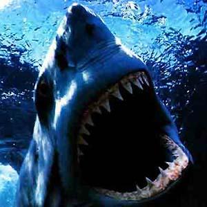 Фото №1 - Испанская акула погибла от гастроэнтерита