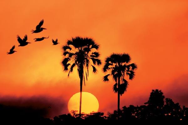 Фото №1 - Ботсвана — ось дикого мира