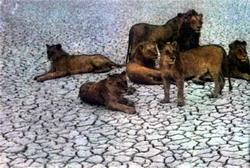 Фото №3 - Акации в песках