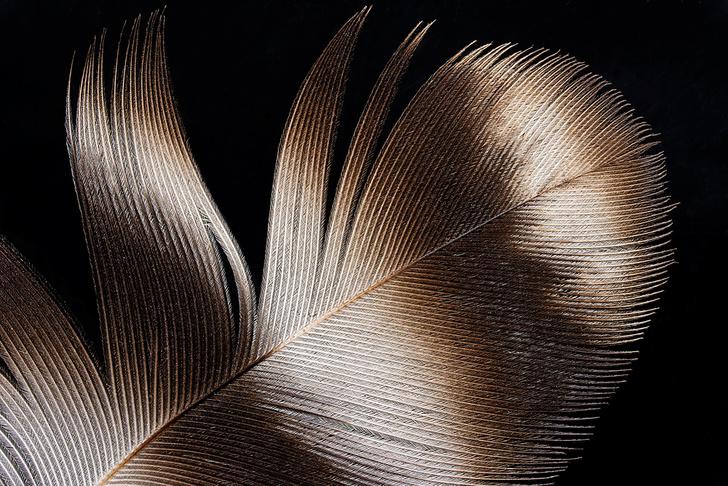 Фото №1 - Фотоальбом для овцы, спящие медузы и другие новые открытия