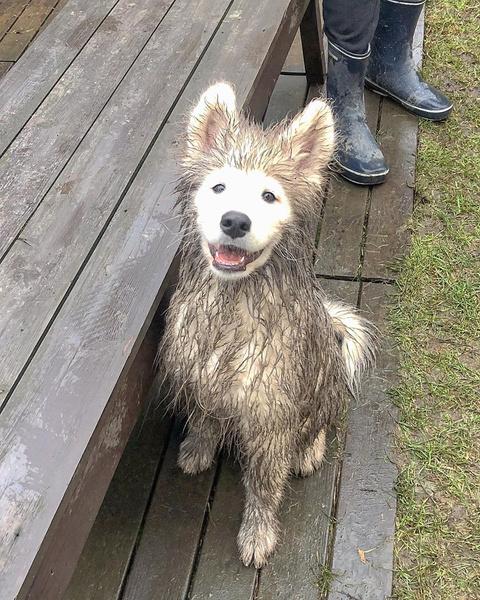Фото №5 - Если собака без поводка: 15 фото песиков до и после прогулки