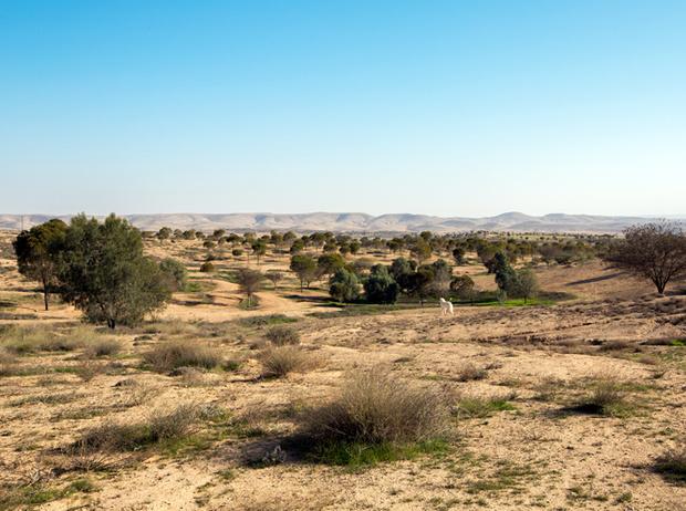 Фото №4 - Мистический Израиль: путешествие к истокам мироздания