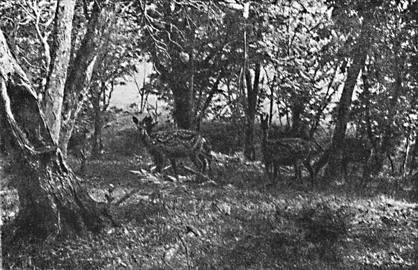 Фото №2 - Гостья из Седанки, Кедровский эксперимент