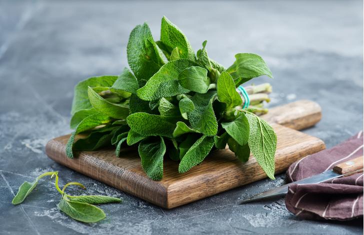 Фото №3 - Лечебные травы: как правильно собирать и применять